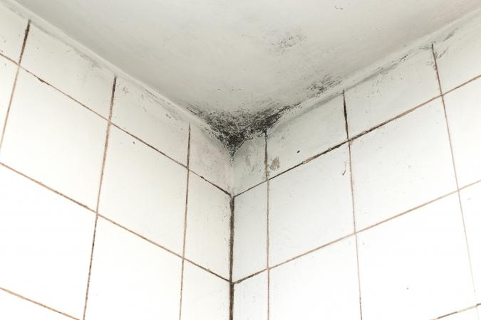 mould on ceramic tiles